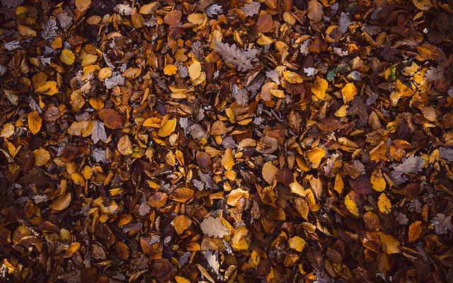 Fragen an den Herbst...